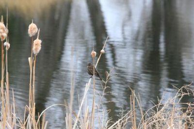 Montana pond in Spring