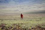 Maasai in Red